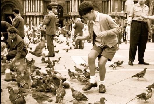 004_venezia piccioni 740